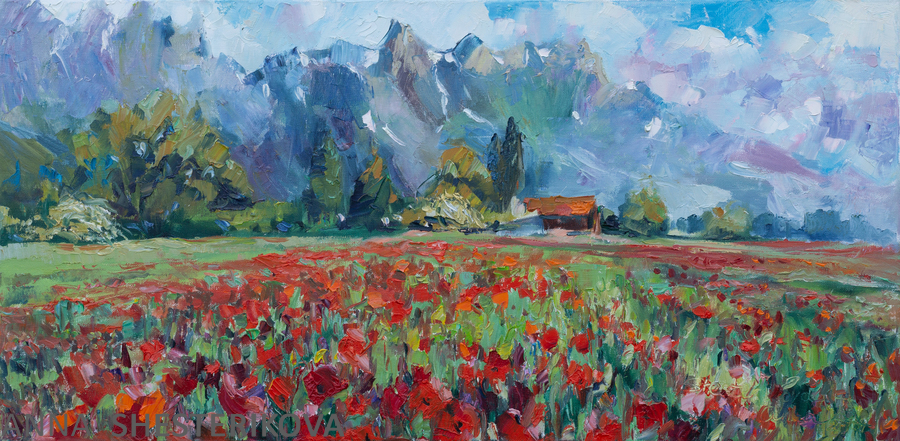 Poppy Field in Grabs